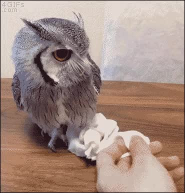 Watch and share Смотреть Пост Полностью GIFs on Gfycat
