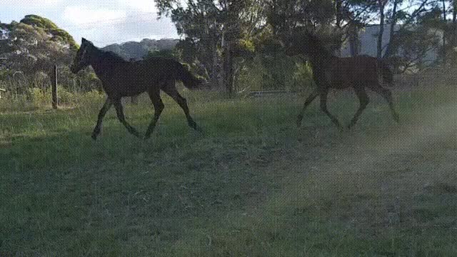 Watch and share FoalNodday1 GIFs on Gfycat