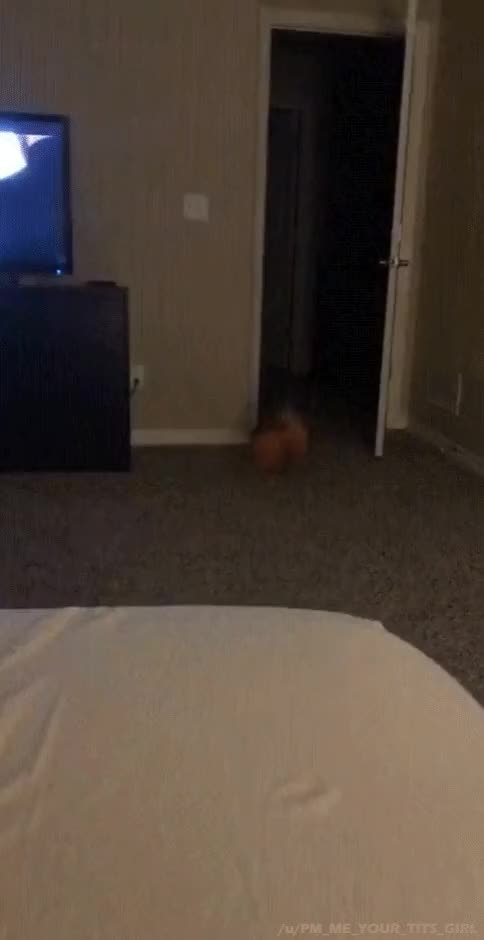 Watch DogJumpsOnBed GIF by PM_ME_YOUR_TITS_GIRL (@pmmeyourtitsgirl) on Gfycat. Discover more animaltextgifs, better every loop, dog, fail, jump GIFs on Gfycat