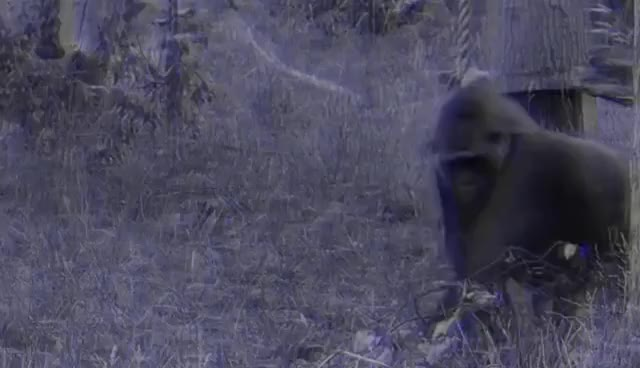 Watch and share Gorilla Midia - Banner 2.1 GIFs on Gfycat