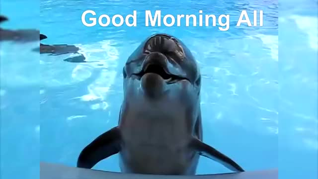 Watch and share Videos Compilations GIFs and Funny Dolphins GIFs by Lori J Jackson on Gfycat
