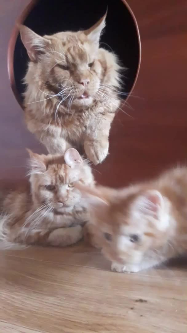 Watch and share Cats GIFs by Fomicheva1979 on Gfycat