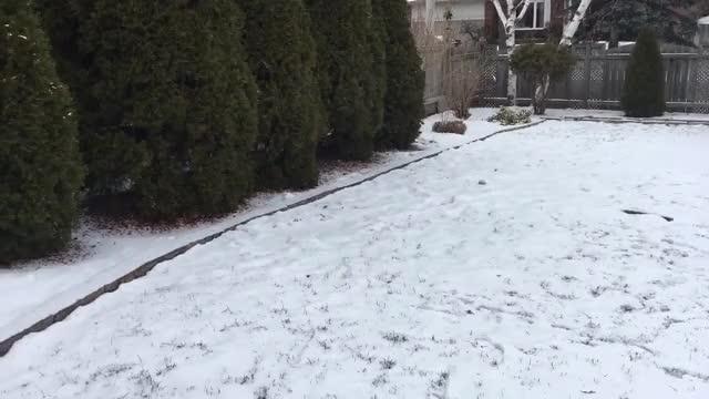 Watch Shepherd Snow Fun || ViralHog GIF by Slim Jones (@slimjones123) on Gfycat. Discover more animal, animals, dog, dogs, german, pet, pets, shepherd, snow, viralhog GIFs on Gfycat