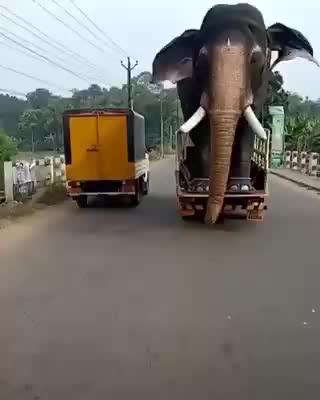 animal, elephant, could be elephant GIFs