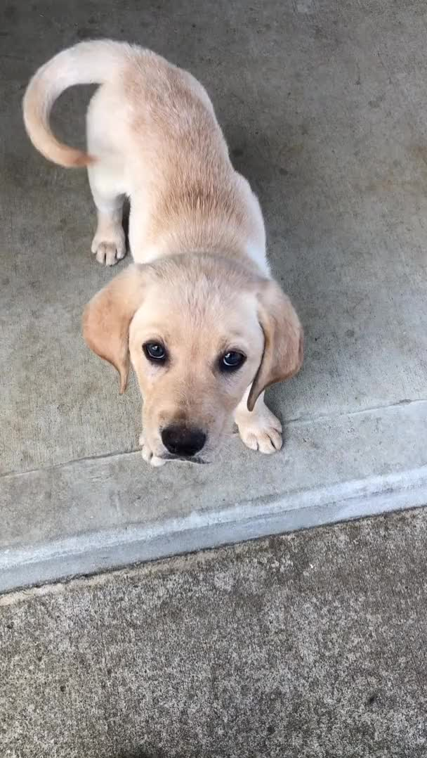 Watch and share Puppy GIFs by teistom on Gfycat