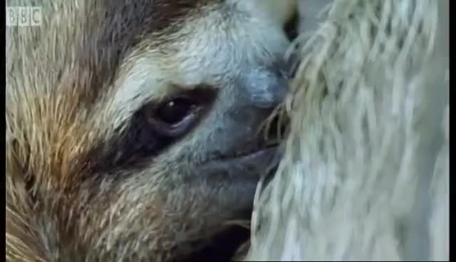 Watch and share Cute Sloth GIFs on Gfycat