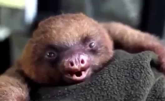 GIF Brewery, aaw, animal, aw, aww, awww, baby, bebe, bed, cute, exhausted, go, good, goodnight, night, sleepy, time, tired, tiring, to, yawn, Aww cute baby GIFs