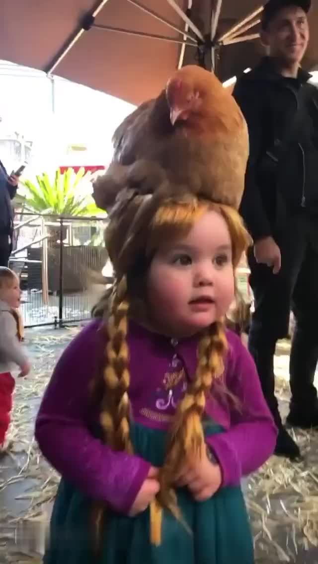 Watch and share This Girl Loves Chickens... Very Much [stefbrunetti_] GIFs by GIFs For Everything on Gfycat