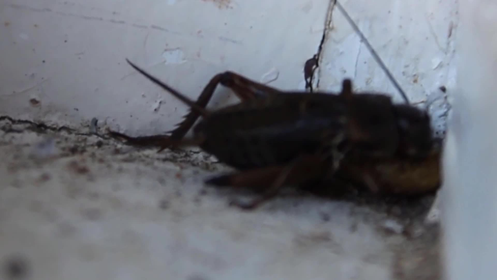 cricket, Cricket Finished GIFs