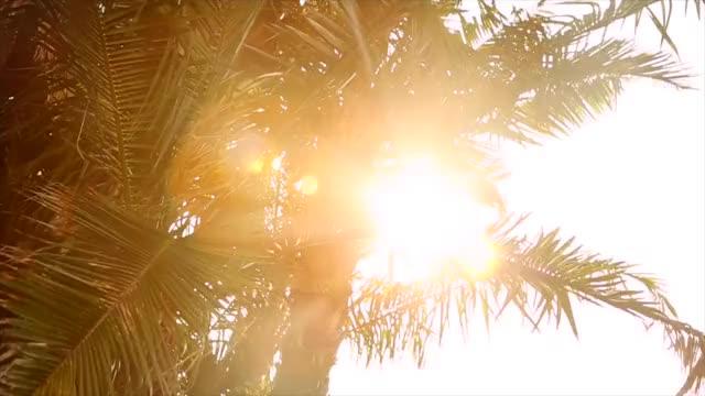 Watch and share Palm Tree Sunshine Stock Footage GIFs on Gfycat