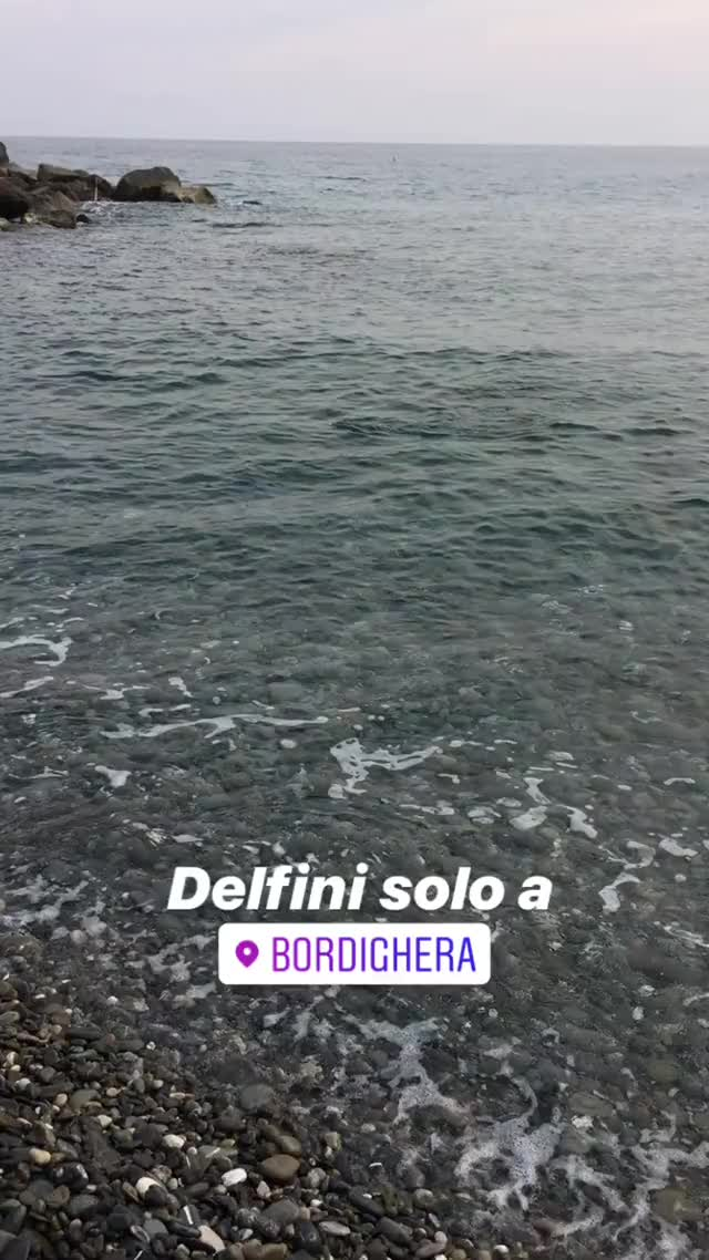 Watch Piccolo delfino a Bordighera (Liguria) GIF by Vittorio Perrucci (@lifeonline) on Gfycat. Discover more related GIFs on Gfycat