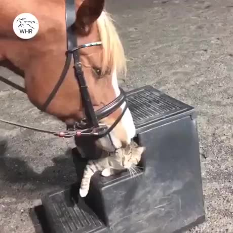 Watch and share Horse GIFs and Cat GIFs by Niraj Singh on Gfycat