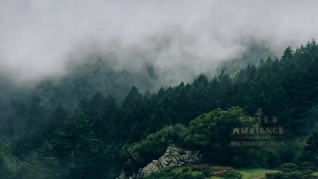 Watch enchanted lands | forest mist GIF on Gfycat. Discover more Forest, Mist, ambiance, ambienceaudio1, fog, writing, zen GIFs on Gfycat