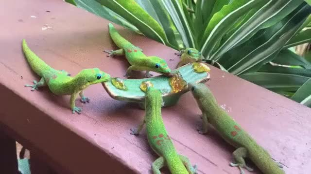 Watch and share Lizards GIFs on Gfycat