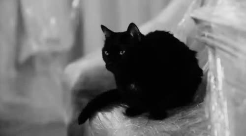 Watch and share Black Cat GIFs on Gfycat