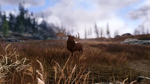 Watch and share Deer GIFs on Gfycat