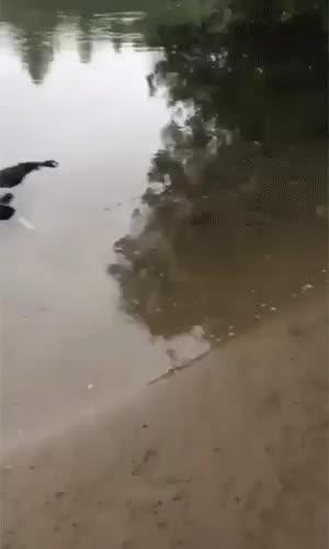 Watch and share Am Crocodil Lol GIFs by napurcel on Gfycat