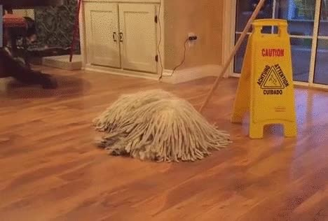 Watch The mop is running  to VOAT GIF on Gfycat. Discover more related GIFs on Gfycat