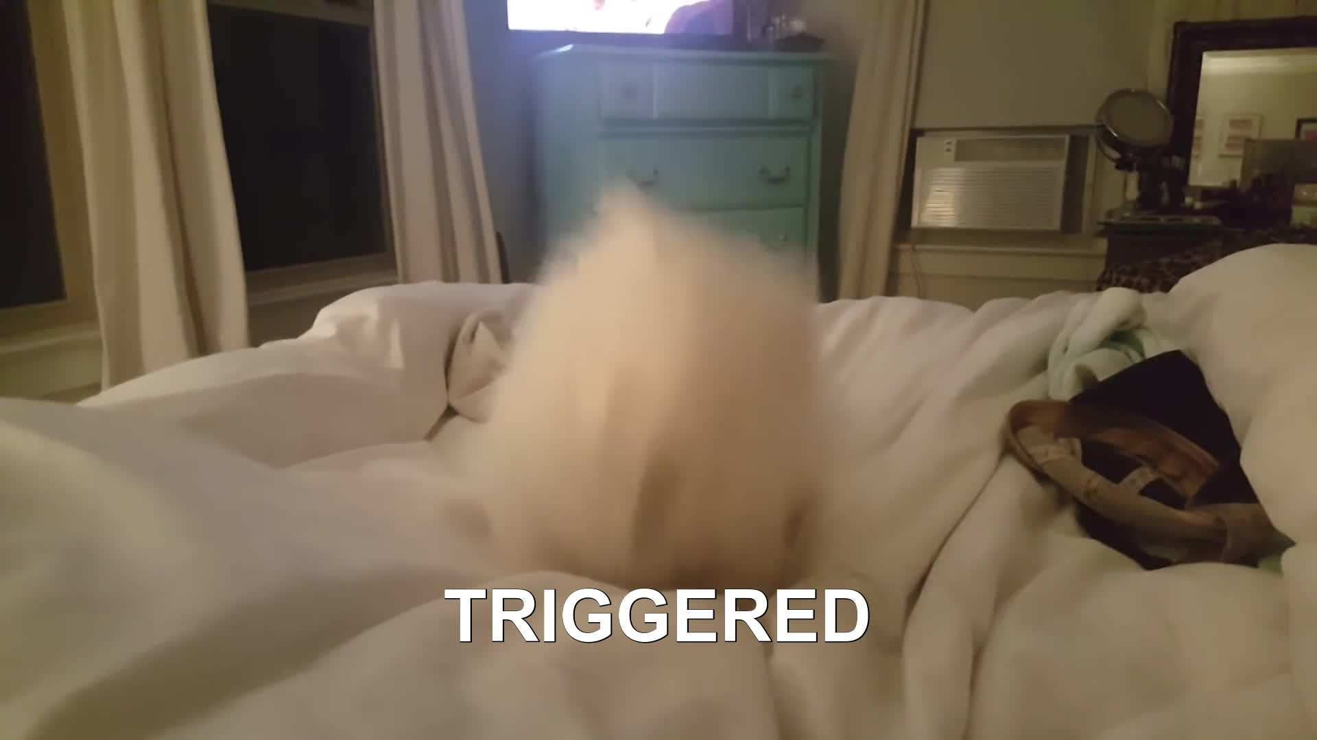pomeranian, puppy, sneeze, ANOTHER TRIGGERED GIFs