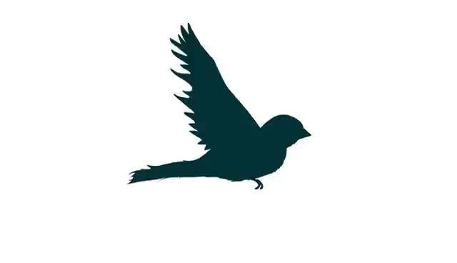 Bird Flying Cycle Animation Gif Gfycat