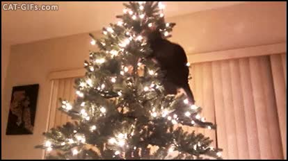 Watch and share Crazy Cat Knocking Down Xmas Tree. The Game Is Over GIFs on Gfycat