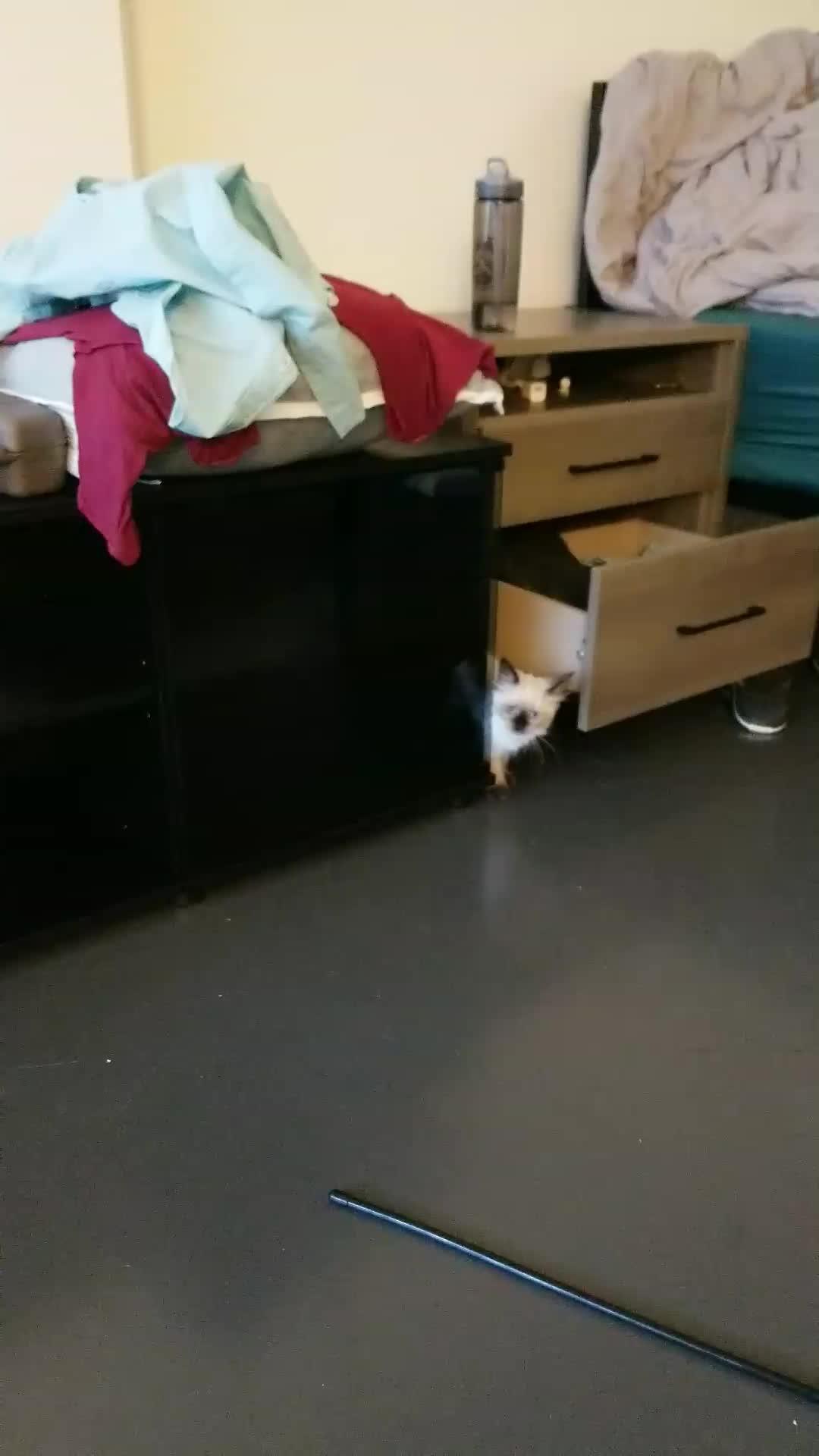 cat, kitten, Snapchat-1754128668 GIFs