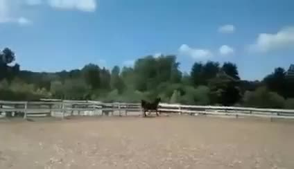 Watch and share HorseEscapeFinal GIFs on Gfycat