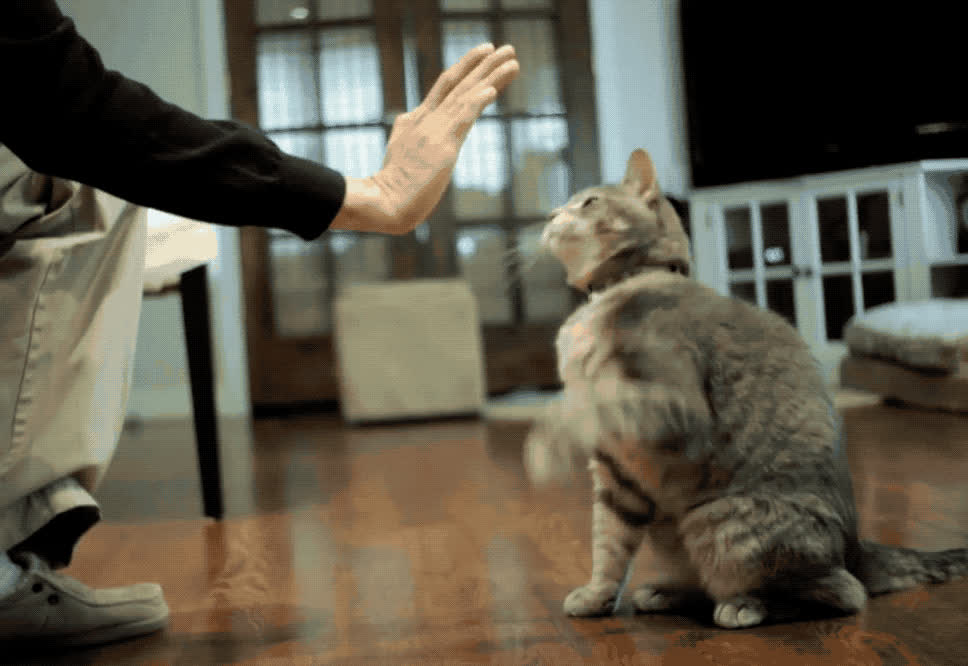 aww, cute, high five, kitty, Kitty High Five GIFs