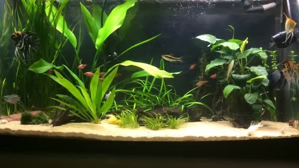 plantedtank, I too checked out the Timelapse on my Iphone. (reddit) GIFs