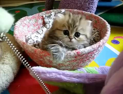 Watch and share Kitten GIFs and Cute GIFs on Gfycat