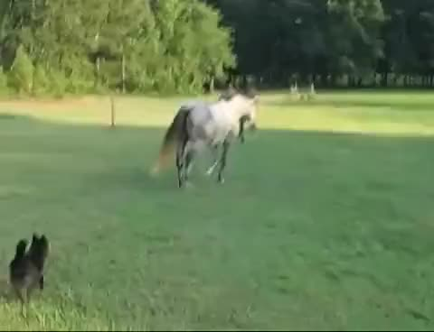 Watch and share Equine Cameraman Part 1 GIFs on Gfycat