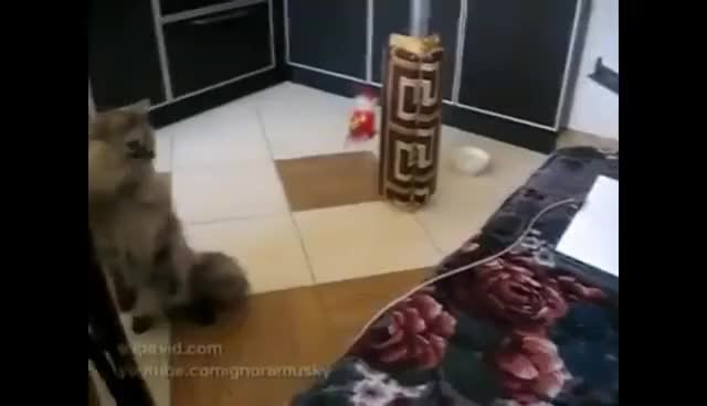 Watch and share Прикольные Коты GIFs on Gfycat