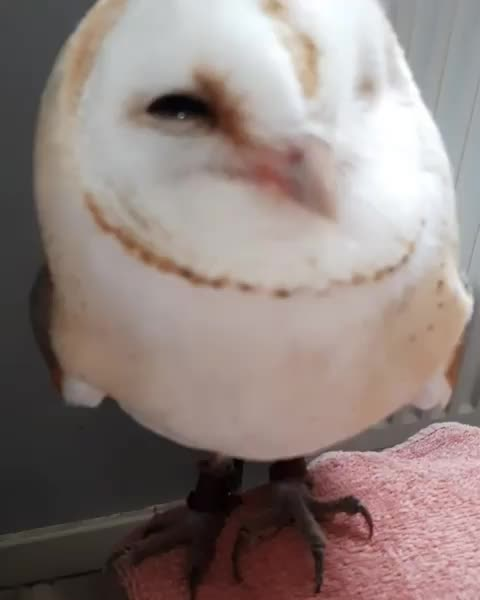 Watch this owl GIF by tothetenthpower (@tothetenthpower) on Gfycat. Discover more owl GIFs on Gfycat