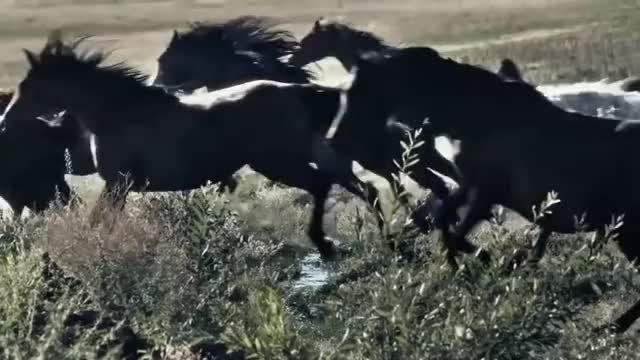 Watch and share Equestrian GIFs and Beautiful GIFs on Gfycat