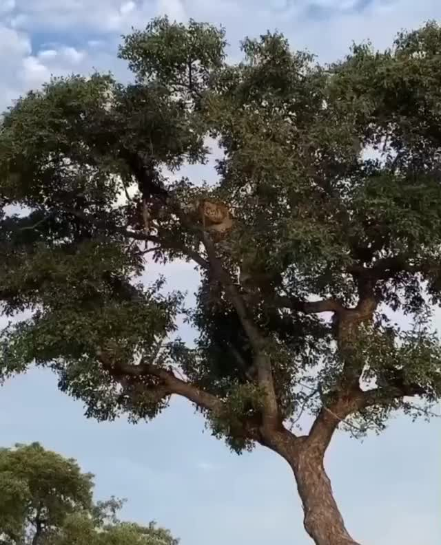 Watch and share Liontree GIFs by PM_ME_STEAM_K3YS on Gfycat