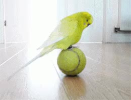 Watch and share Bird GIFs on Gfycat