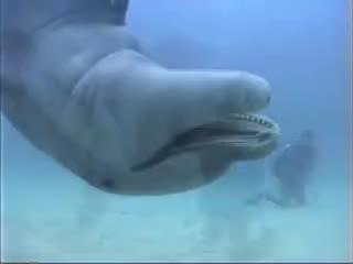 scuba diving dolphin, scuba diving dolphin GIFs