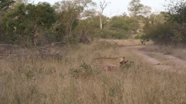 Watch and share IG GIFs by Londolozi Game Reserve on Gfycat