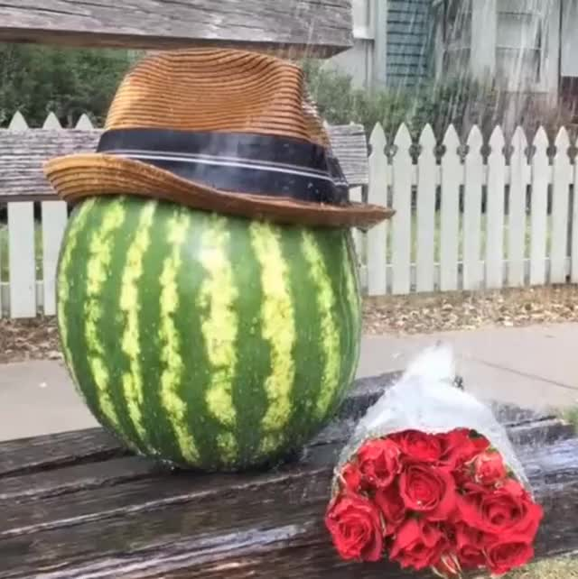 Watch and share Water Melon GIFs on Gfycat