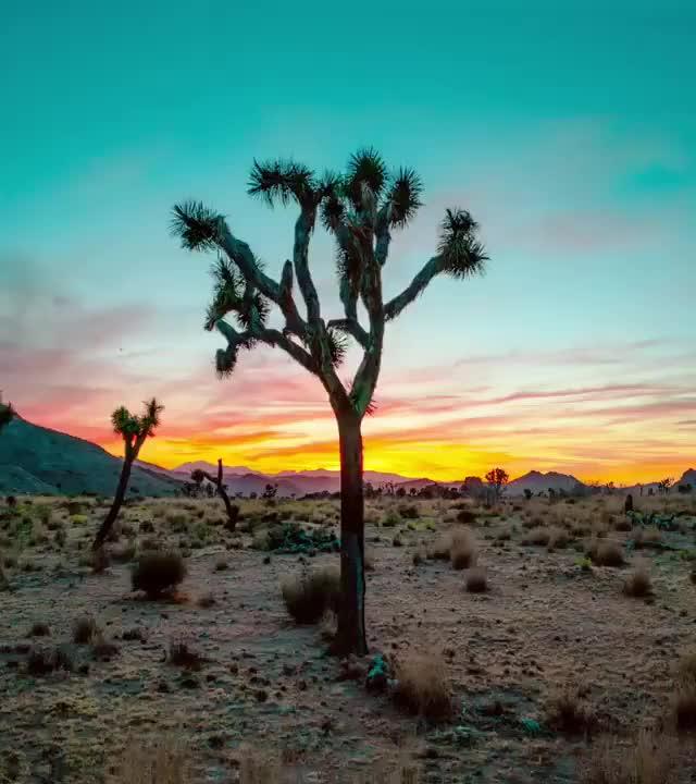 Watch and share Desert Sun GIFs on Gfycat