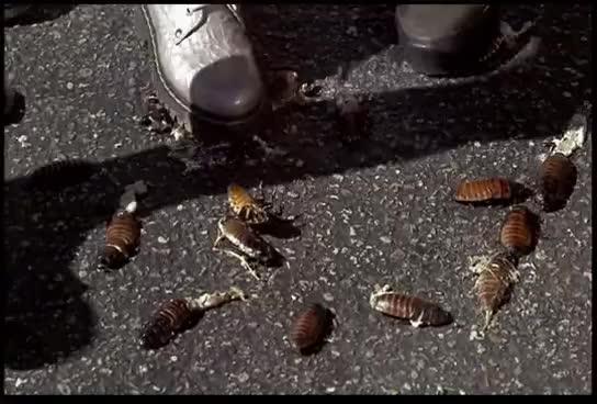 squash bug, Squash the Bugs! GIFs