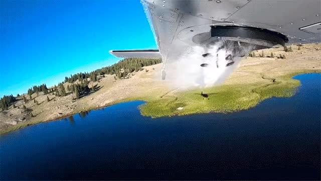Watch and share Гифки-рыба-самолет-4674260 GIFs on Gfycat