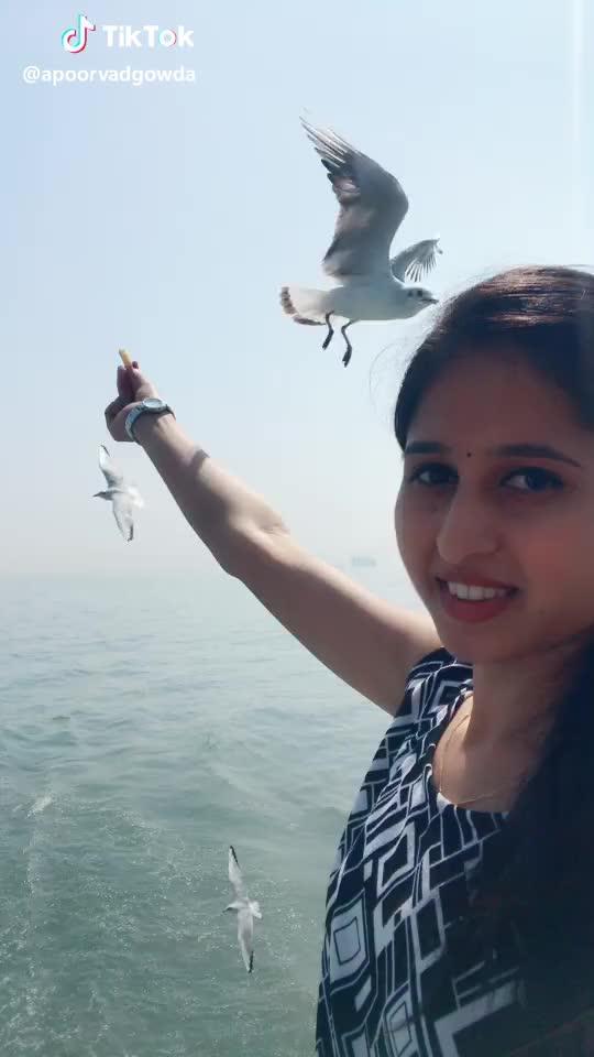 Watch 🕊🕊 #birds #love #smile #mumbaigateofindia #tik_tok_india #beautifullocation #iamsoenjoy #kannadathi😍 GIF by TikTok (@tiktok_funny) on Gfycat. Discover more birds, love, mumbaigateofindia, smile GIFs on Gfycat