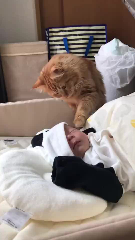 Watch and share Baby GIFs and Cat GIFs by 1monkeyshort on Gfycat