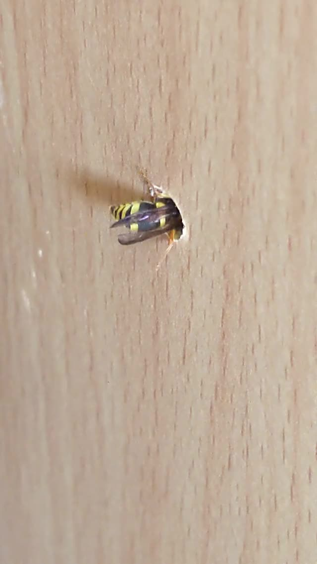 Watch and share Wasp GIFs on Gfycat