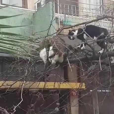 cats GIFs