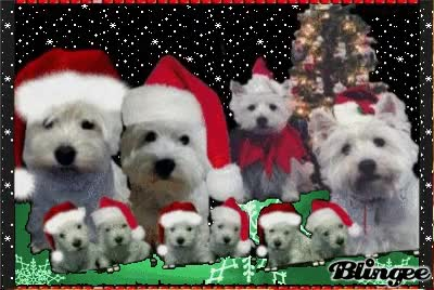 Watch and share Westie Christmas GIFs on Gfycat