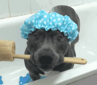 Watch this bath GIF by Reactions (@ioanna) on Gfycat. Discover more aw, bath, bathtub, brush, clean, cute, dirty, dog, epic, fresh, funny, hat, hilarious, patient, pet, puppy, shower, sweet, wait, water GIFs on Gfycat