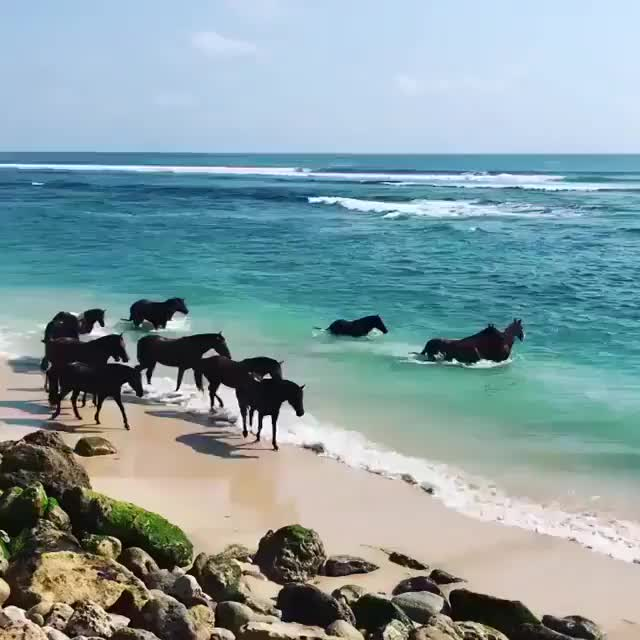 Watch and share Awesome GIFs and Horse GIFs by notmyproblem on Gfycat