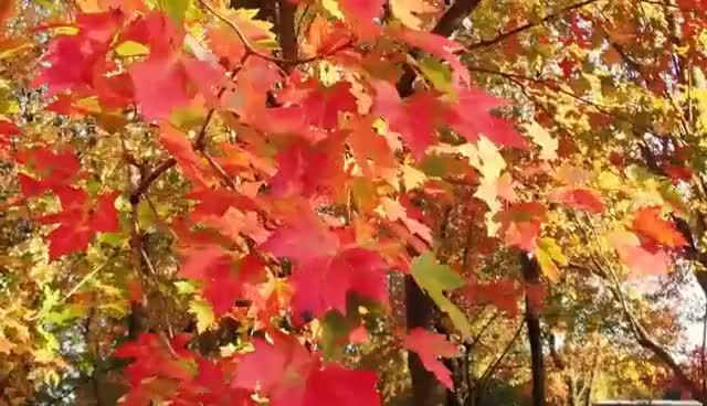 Watch and share 4K Autumn Forest & Relaxing Piano Music - Beautifull Fall Leaf Colors In 4K UHD - 2 Hours GIFs on Gfycat